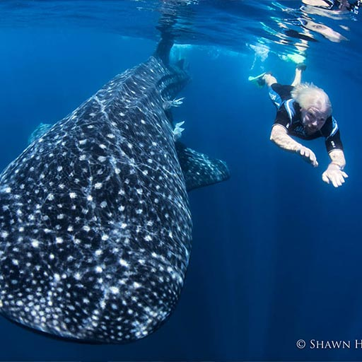 Richard Branson swimming with whale sharks